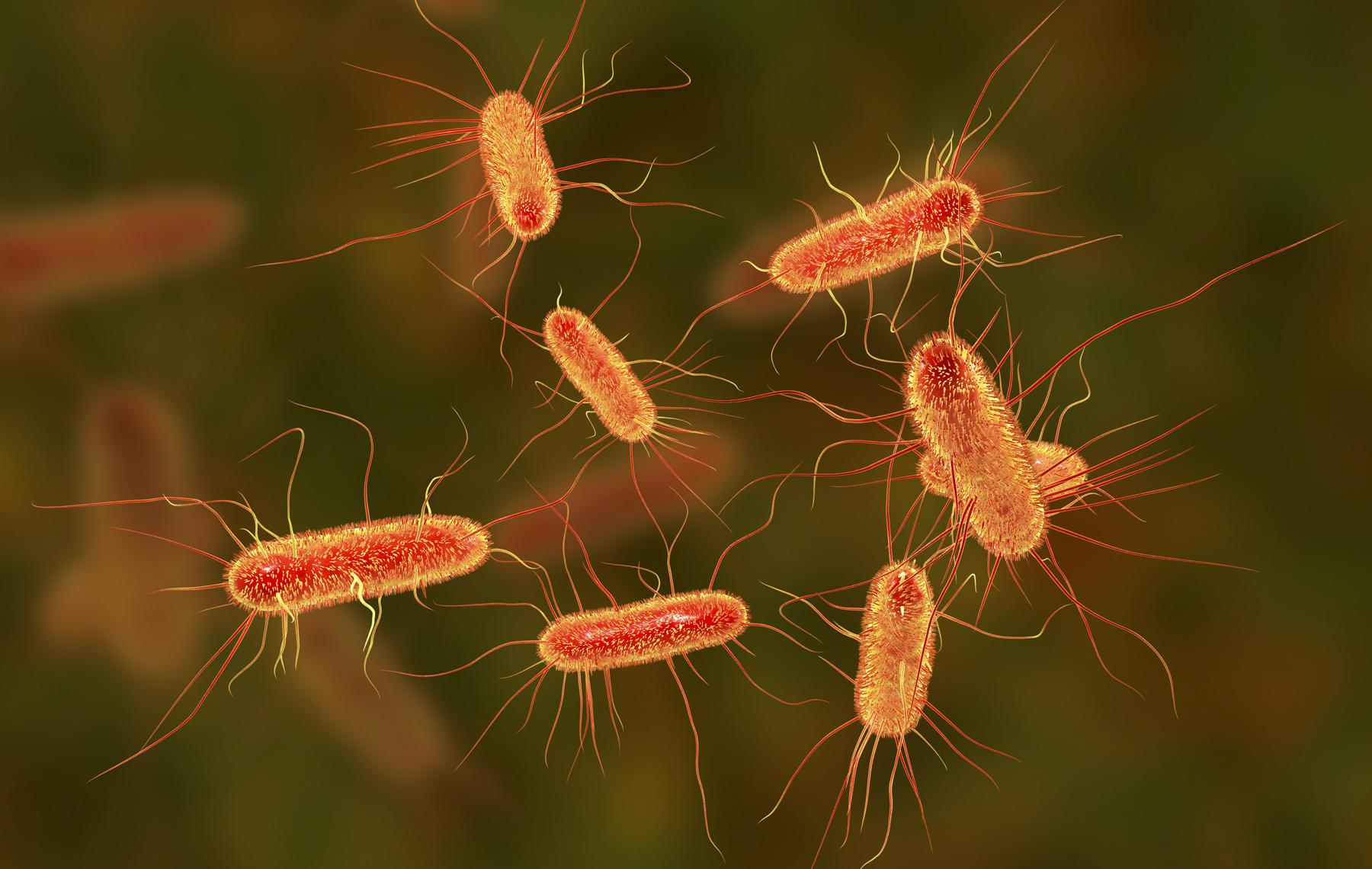 Microscopic creatures
