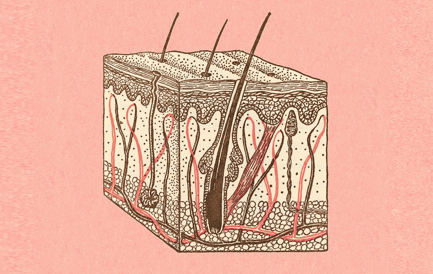Imagen de la epidermis