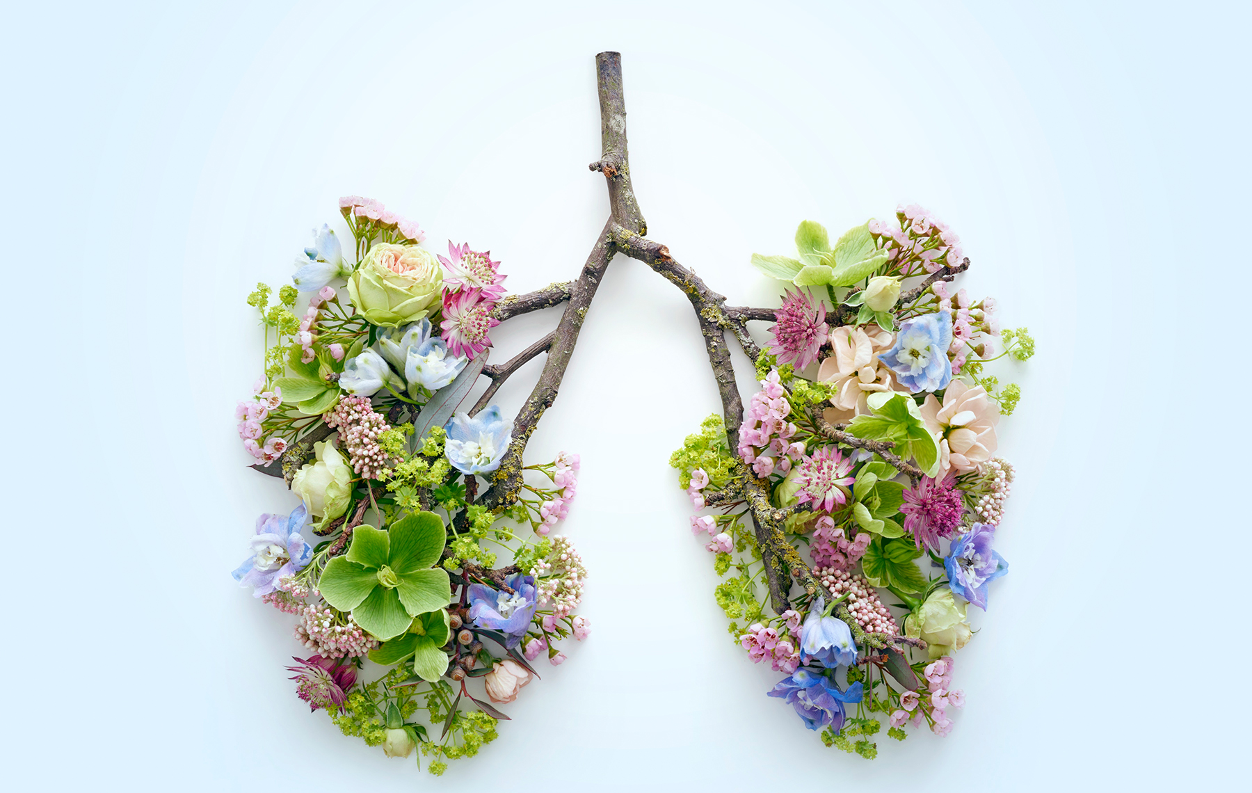 Flowers and a branch mocking human lungs