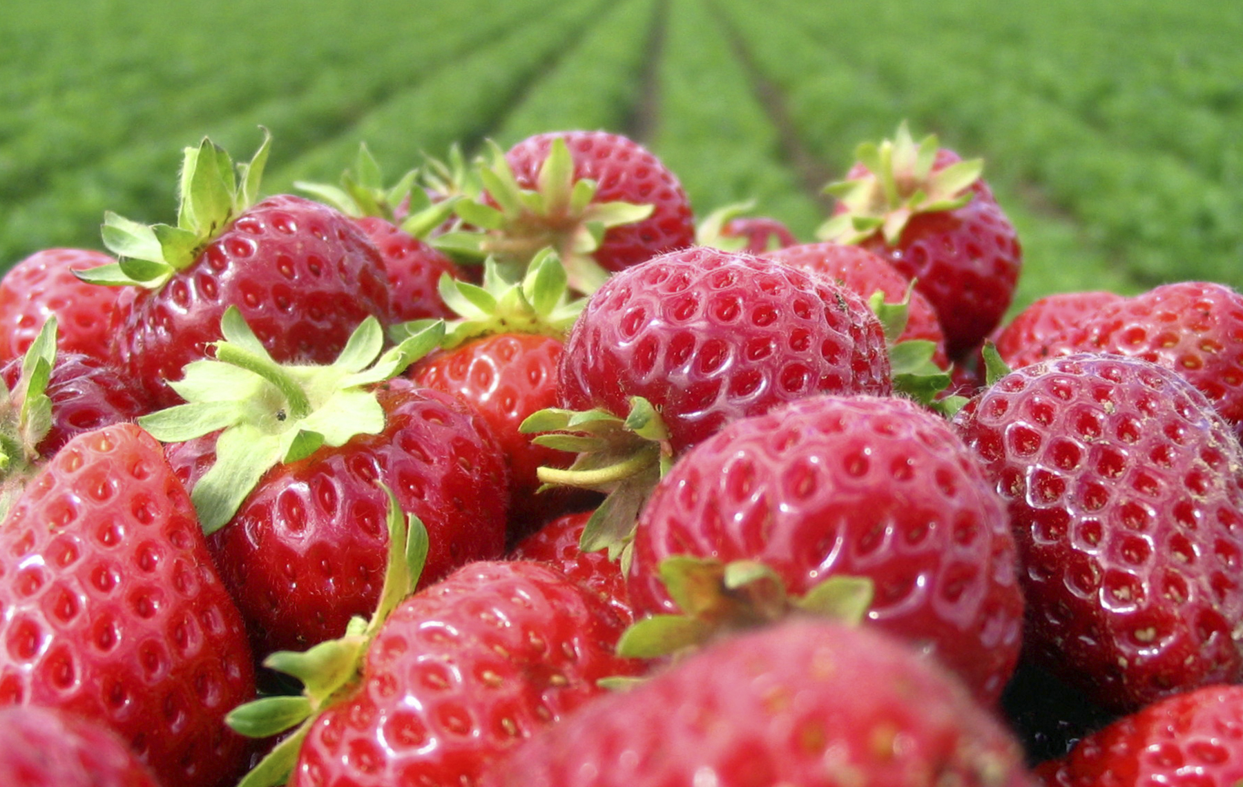 Strawberries fruit picture