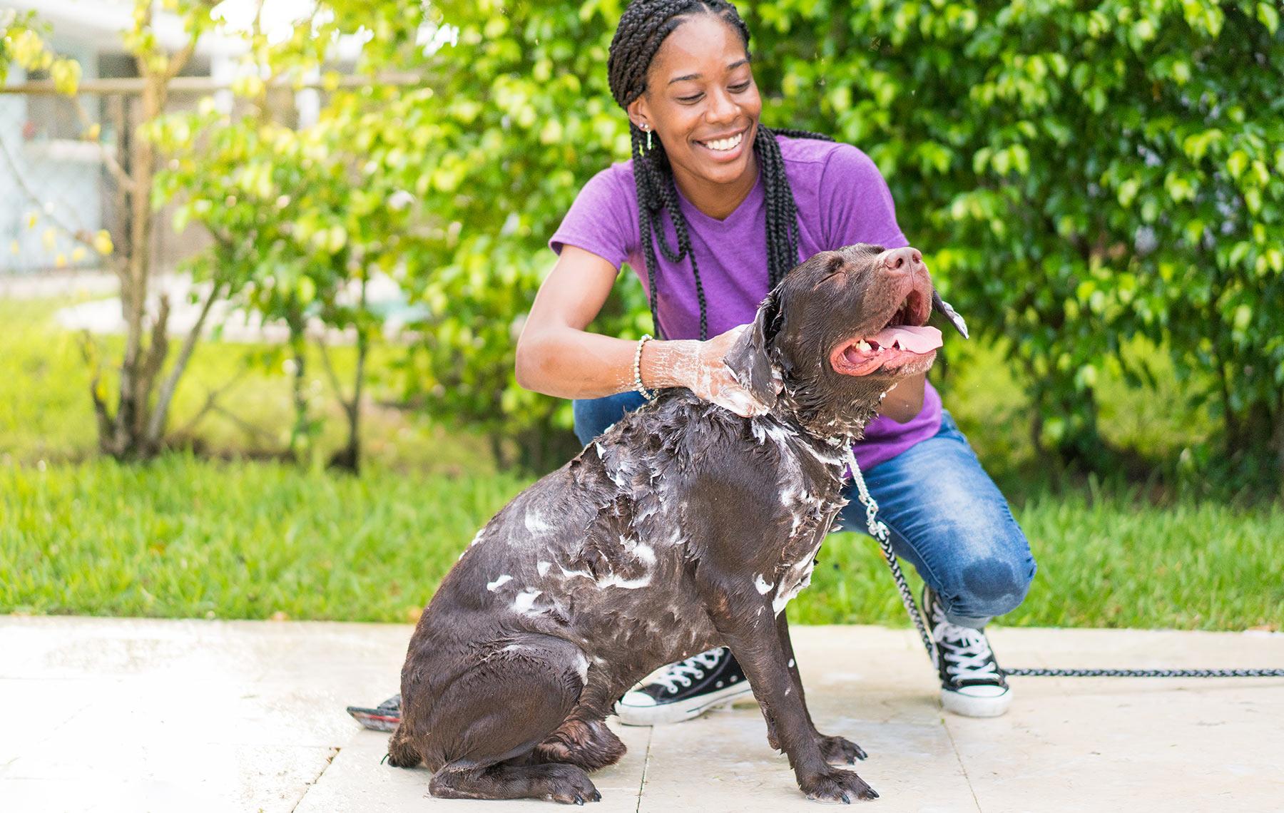 Allergies Dog Wash